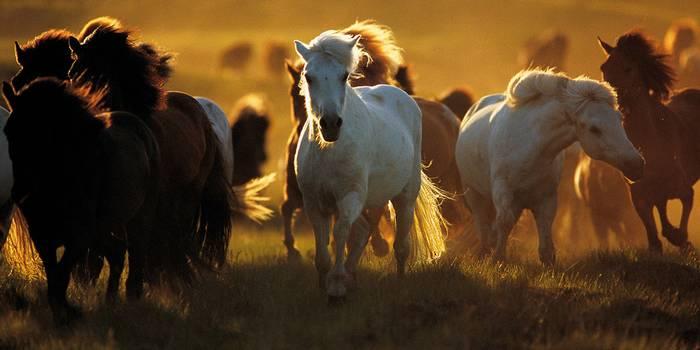 צילום סוסים להדפסה