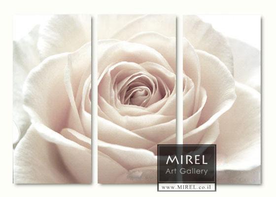 פרח לבן בחלקים