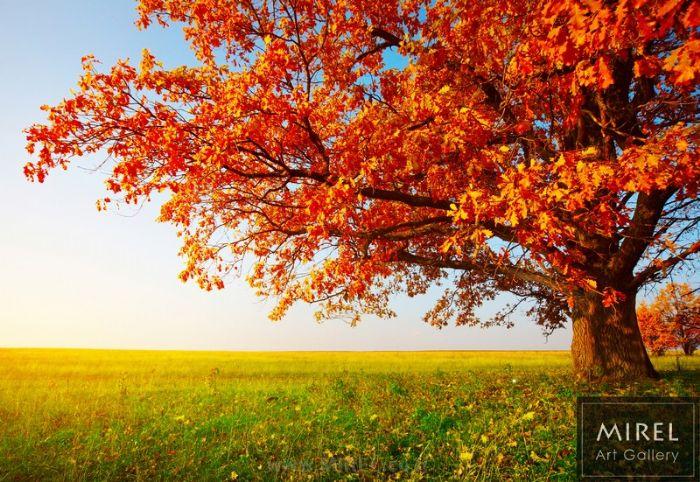 עץ הכתום