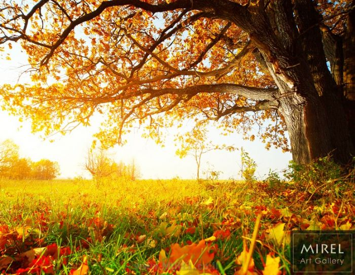 מתחת לעץ
