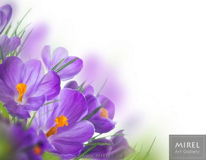 פרחים סגולים