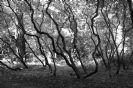 היער המכושף - אורי חן - אדמה יוצרת