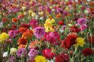 בא אביב - יואל שתרוג - אדמה יוצרת
