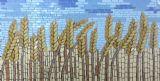 שדה שיבולים ---הוזמן ונמכר---- קרמיקה 65X25