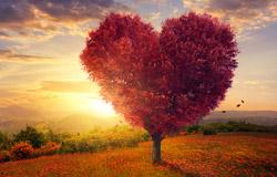 רק אהבה תנצח