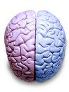 סרטן המוח