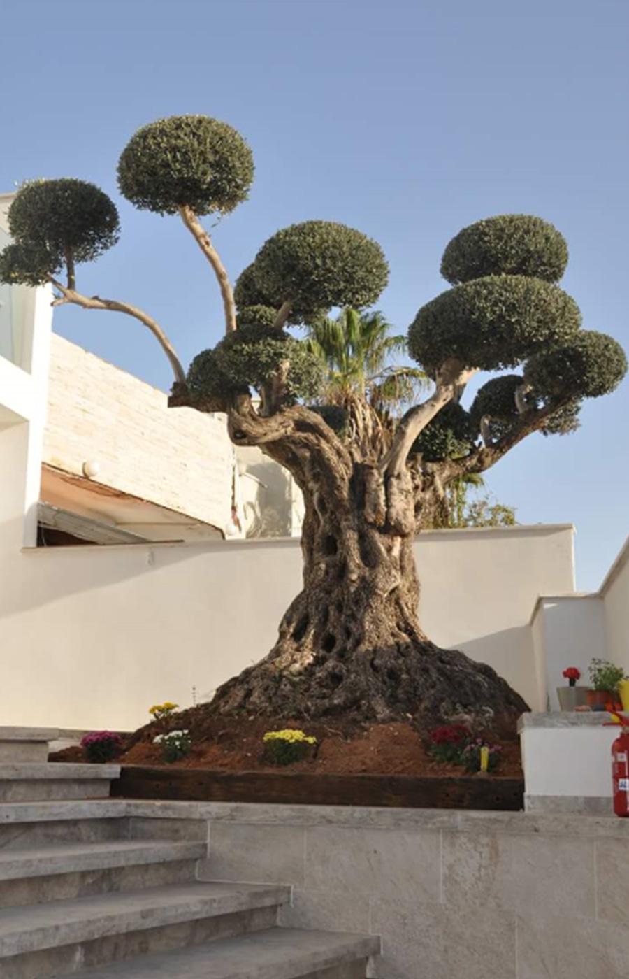 מודיעין עצי זית | דרך האבן FC-81